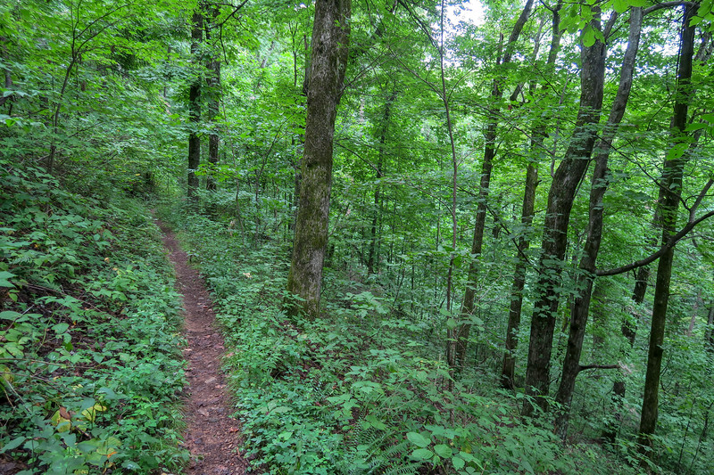 Laurel Mountain Trail -- 3,490'