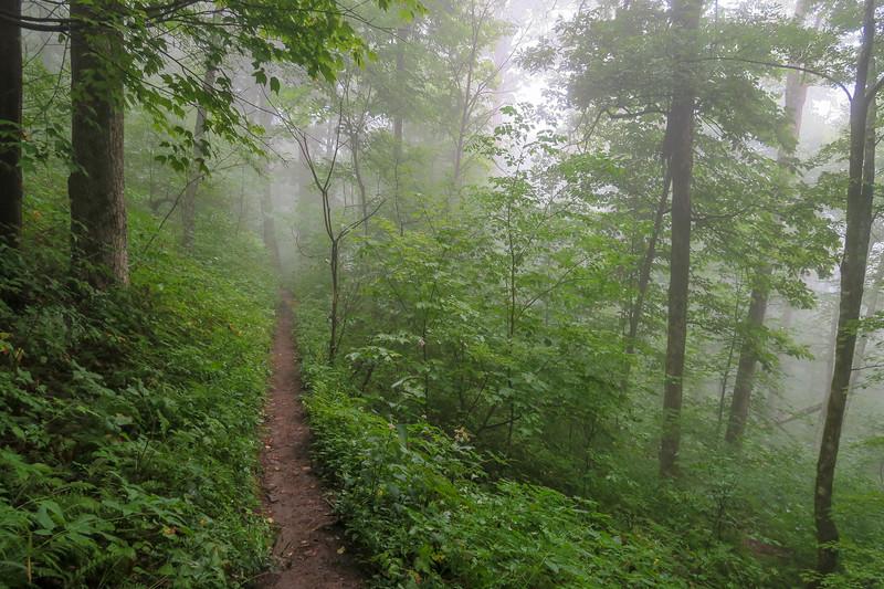 Laurel Mountain Trail -- 4,200'