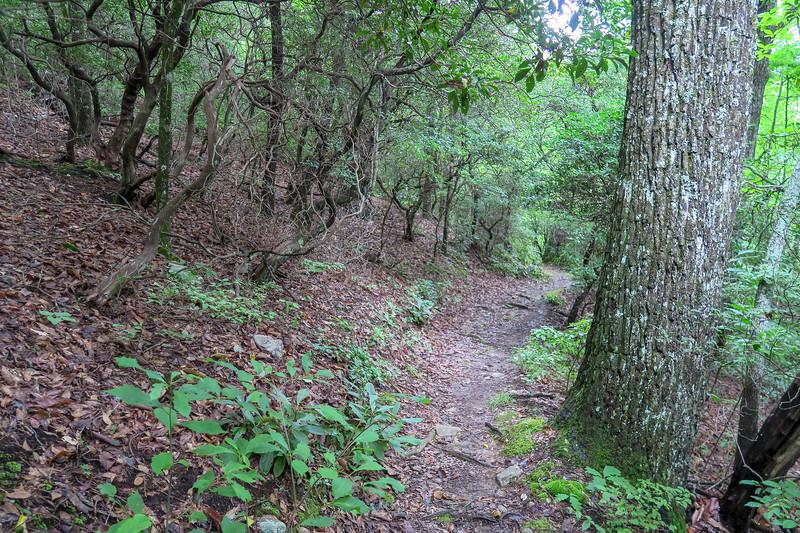 Laurel Mountain Trail -- 3,520'