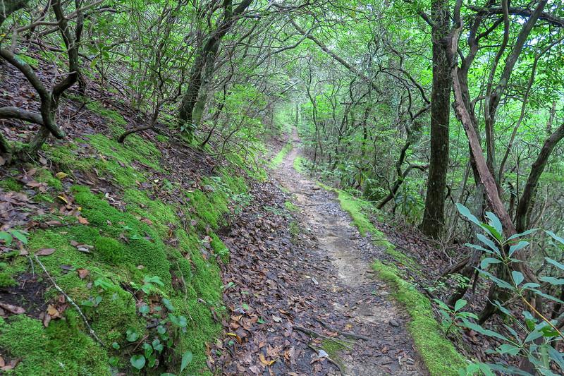 Laurel Mountain Trail -- 3,550'