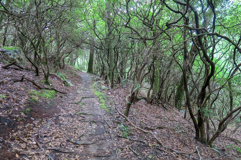 Laurel Mountain Trail -- 3,460'