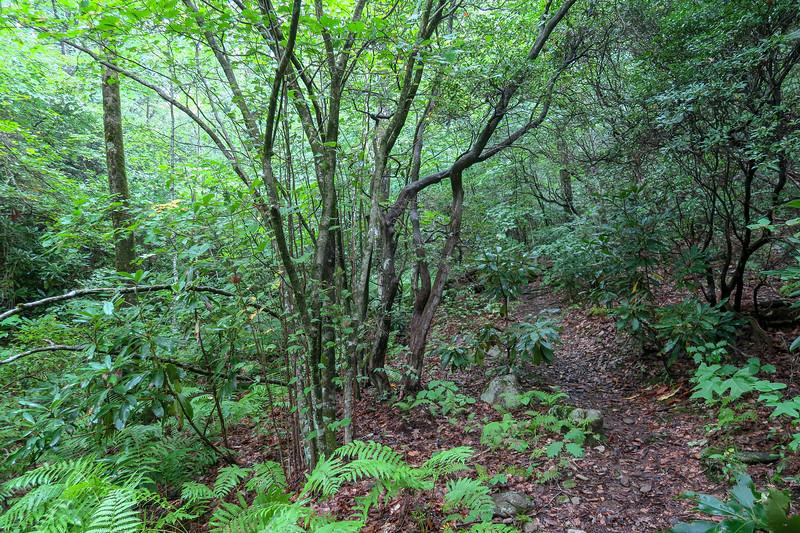 Slate Rock-Laurel Mountain Connector Path -- 3,980'