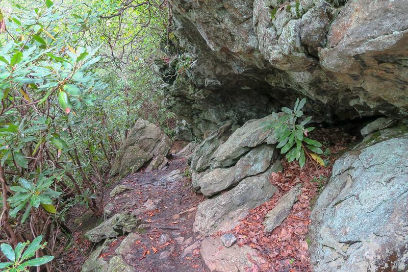 Laurel Mountain Trail -- 3,800'