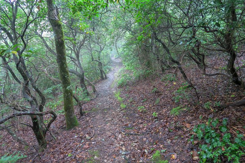 Laurel Mountain Trail -- 4,230'