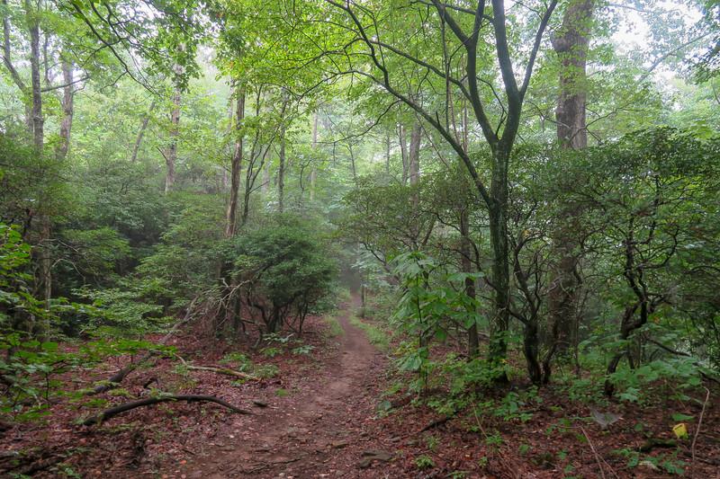 Laurel Mountain Trail @ Johnson Gap -- 4,000'