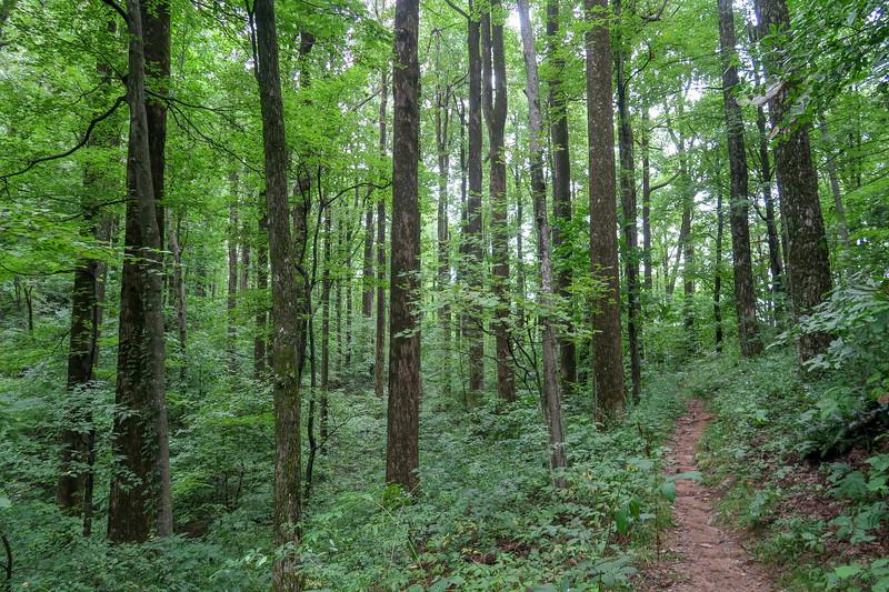 Laurel Mountain Trail -- 3,580'