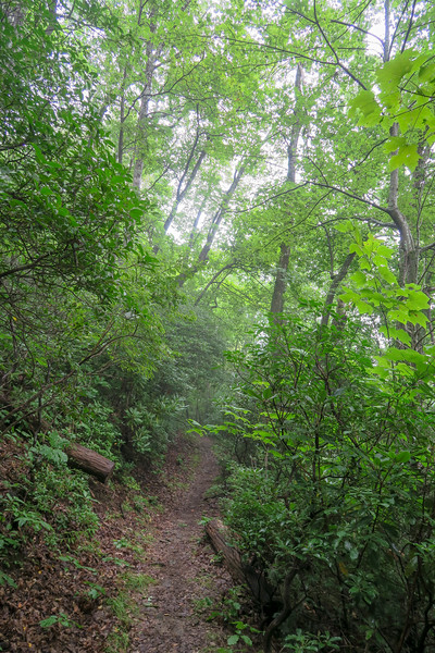Laurel Mountain Trail -- 3,820'