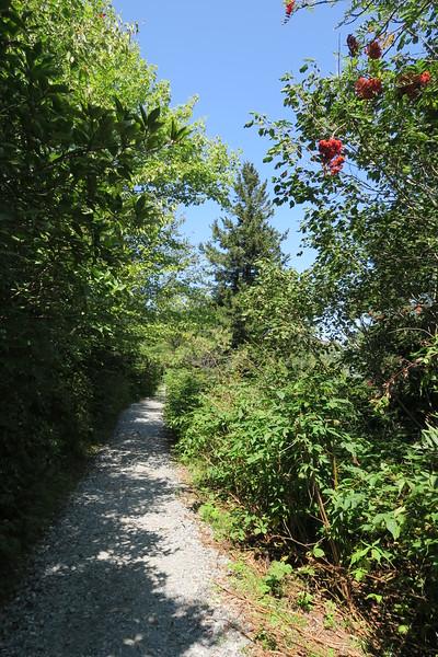 Sam Knob Trail -- 5,800'