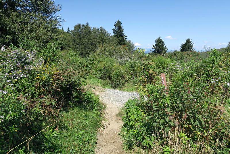 Sam Knob Trail -- 5,820'