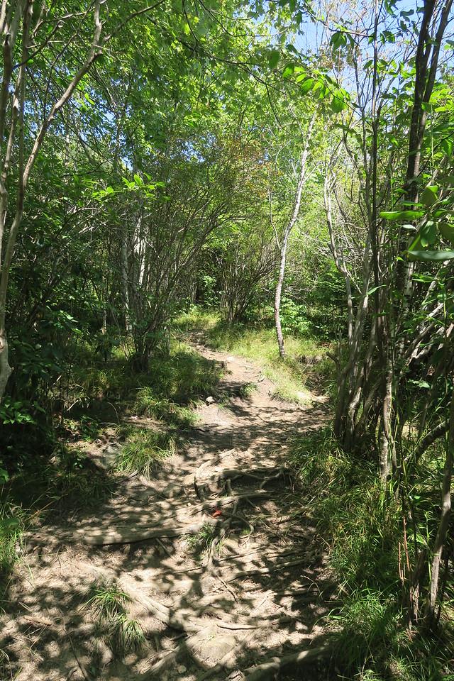 Sam Knob Trail -- 5,600'