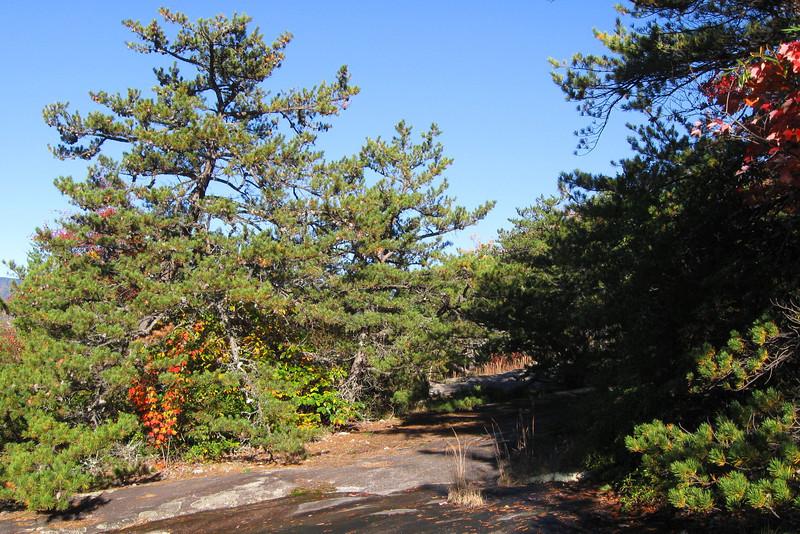 West Cliff Path
