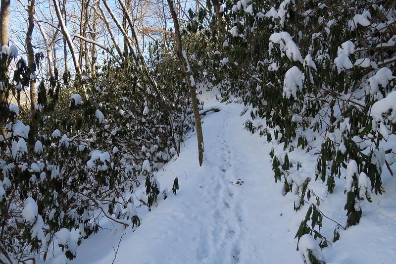 Looking Glass Rock Trail - 2,700'