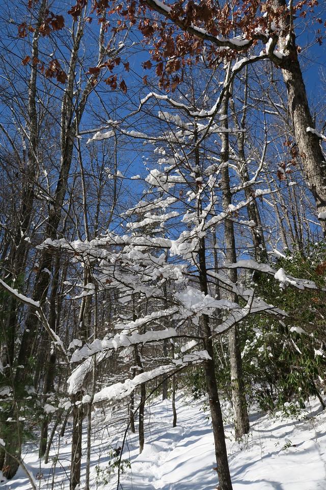 Looking Glass Rock Trail - 3,280'