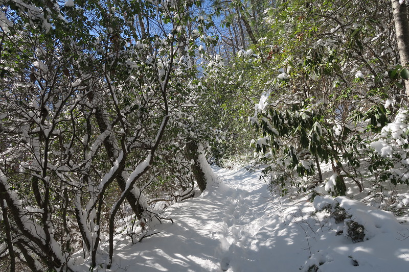 Looking Glass Rock Trail - 3,100'