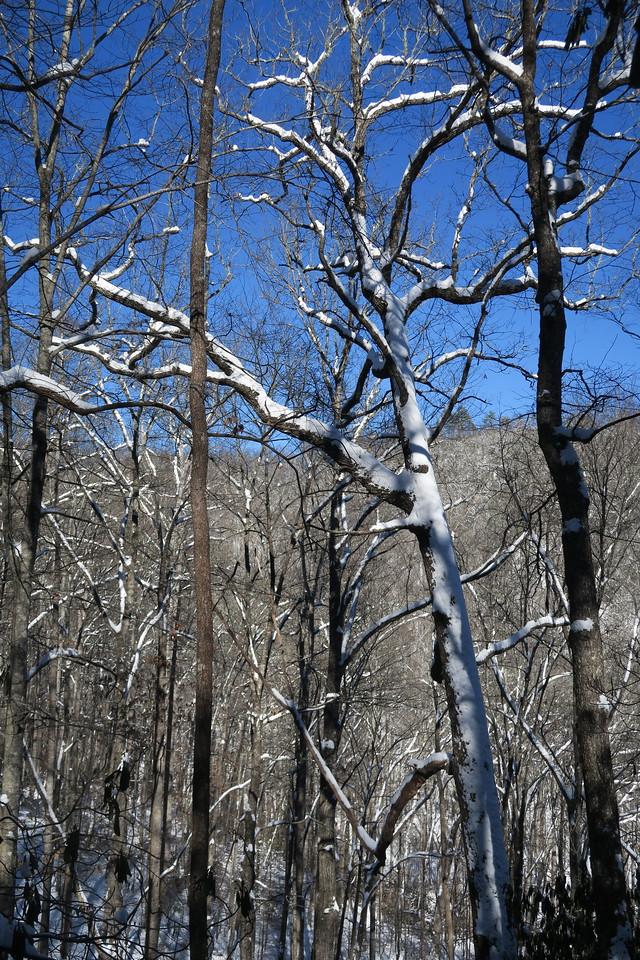 Looking Glass Rock Trail - 2,720'