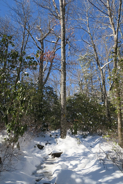 Looking Glass Rock Trail - 3,550'