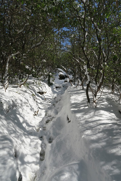 Looking Glass Rock Trail - 3,680'