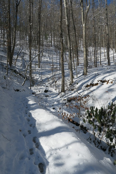 Looking Glass Rock Trail - 2,380'