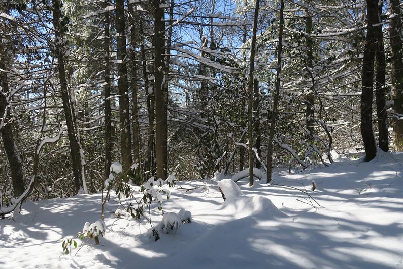 Looking Glass Rock Trail - 3,800'