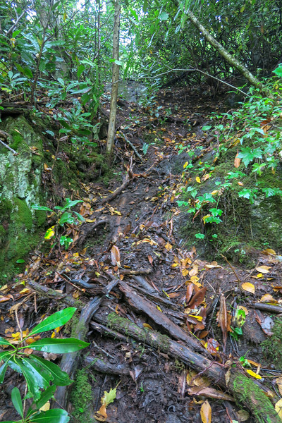 Middle Prong Falls Path
