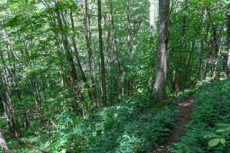 Buckeye Gap Trail -- 4,320'
