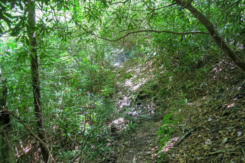 Haywood Gap Trail -- 4,700'