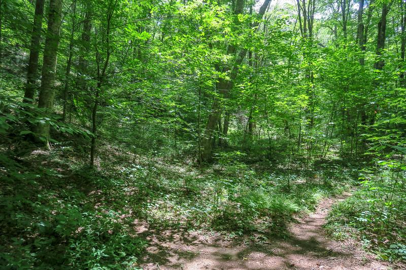 Haywood Gap-Buckeye Gap Trail Junction -- 4,020'