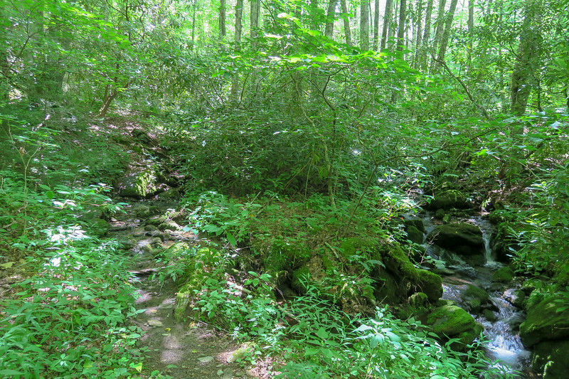 Haywood Gap Trail @ Camp Two Branch -- 3,950'
