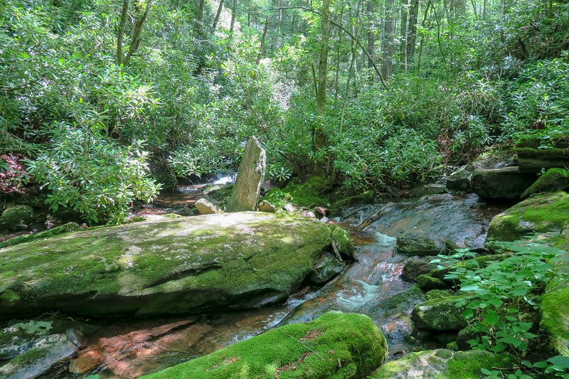 Haywood Gap Stream/Possum Hollow Tributary Confluence -- 4,640'