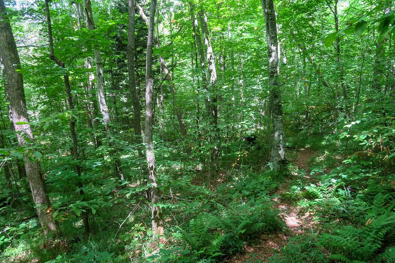 Buckeye Gap Trail -- 4,820'
