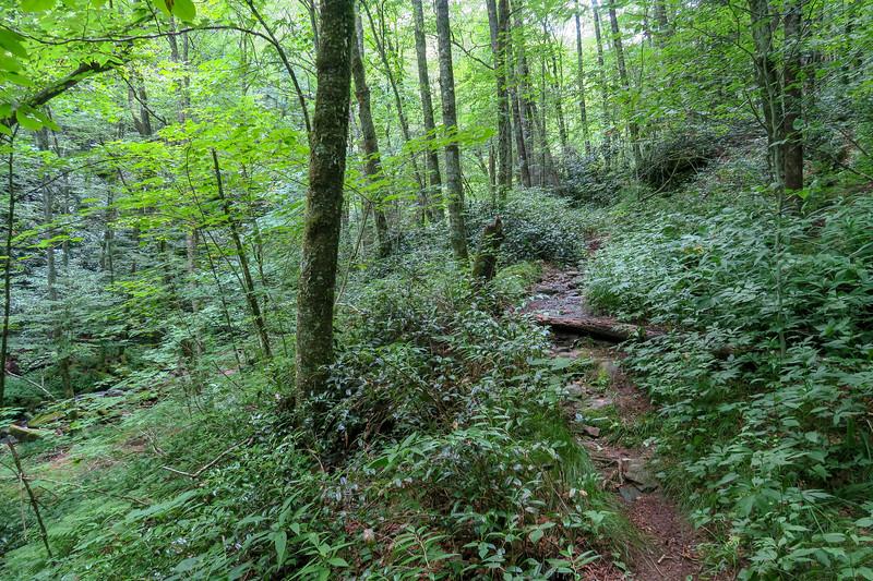 Haywood Gap Trail -- 4,420'