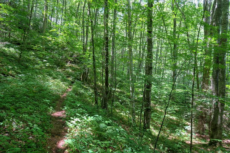 Haywood Gap Trail -- 4,160'