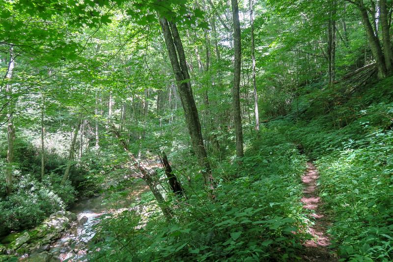 Haywood Gap Trail -- 3,930'