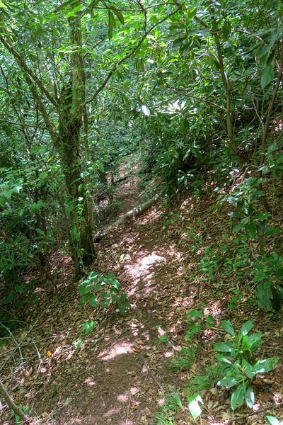 Haywood Gap Trail -- 4,480'