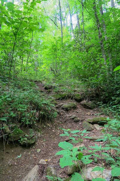 Haywood Gap Trail -- 4,550'