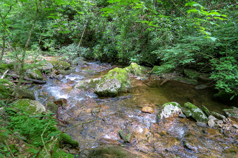 Haywood Gap Stream -- 4,450'