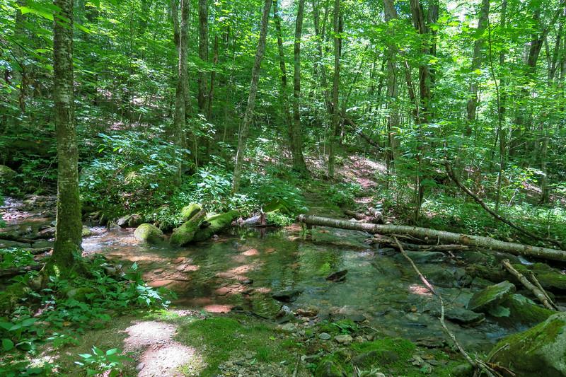 Haywood Gap Trail @ Grassy Ridge Branch -- 4,050'