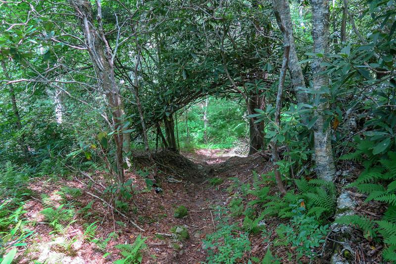 Buckeye Gap Trail -- 5,320'
