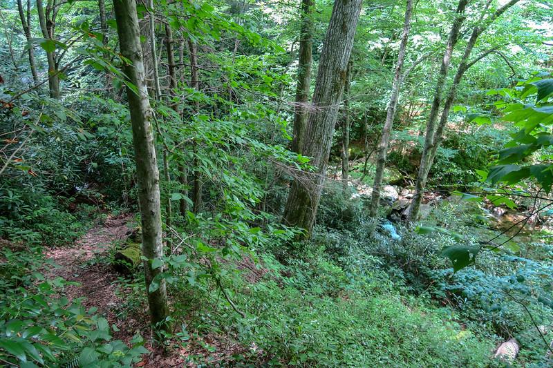 Haywood Gap Trail -- 3,850'