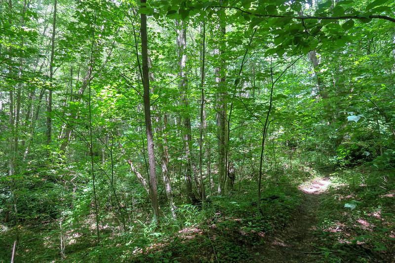 Haywood Gap Trail -- 3,980'
