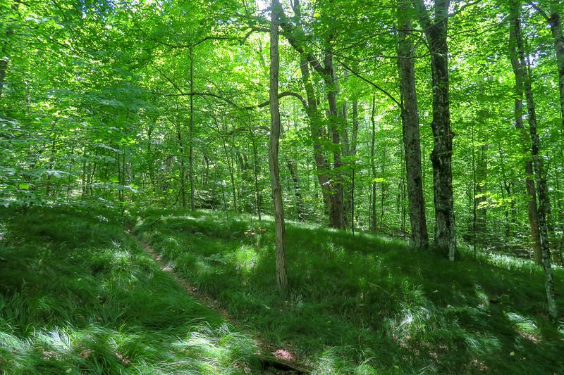 Buckeye Gap Trail -- 4,860'