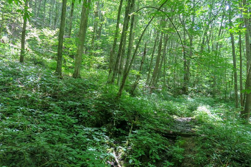 Haywood Gap Trail -- 4,000'