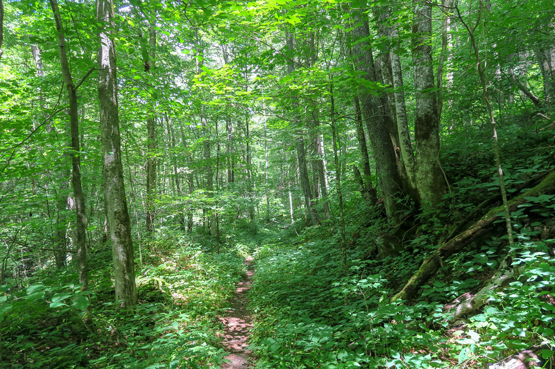 Haywood Gap Trail -- 3,920'