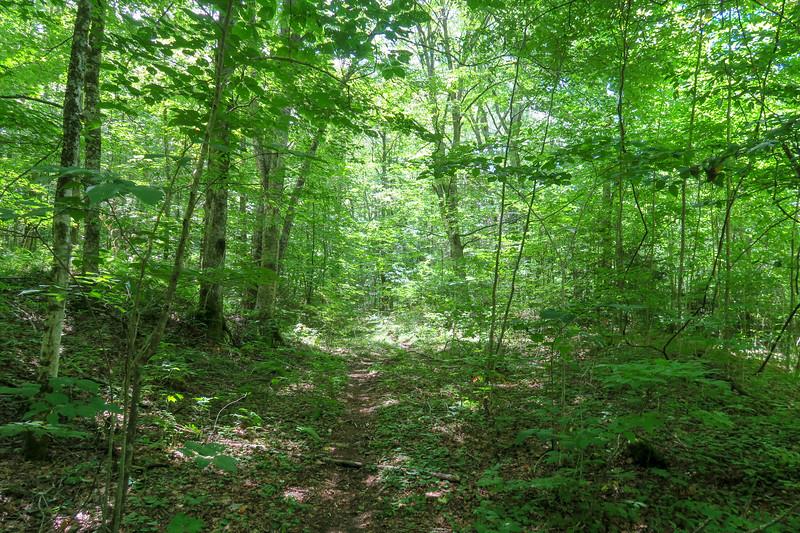 Haywood Gap Trail -- 4,030'