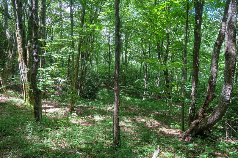 Buckeye Gap Trail -- 5,080'