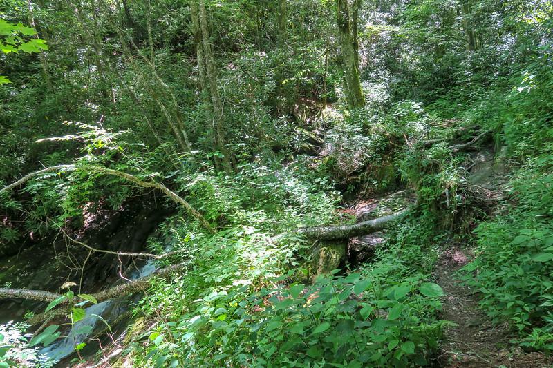 Haywood Gap Trail -- 4,680'