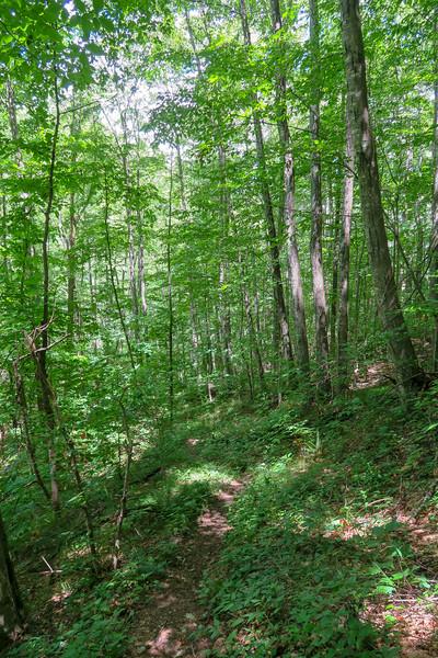 Buckeye Gap Trail -- 4,150'