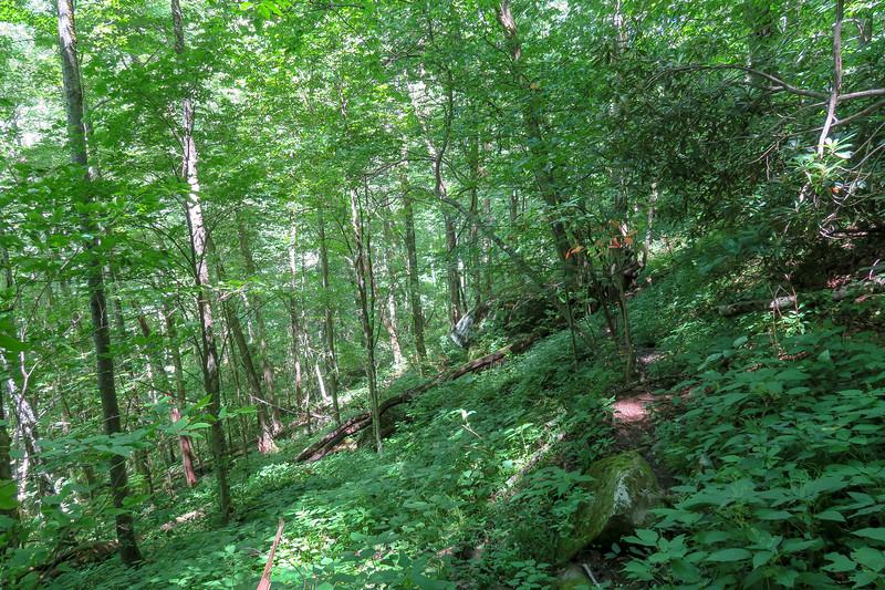 Buckeye Gap Trail -- 4,250'