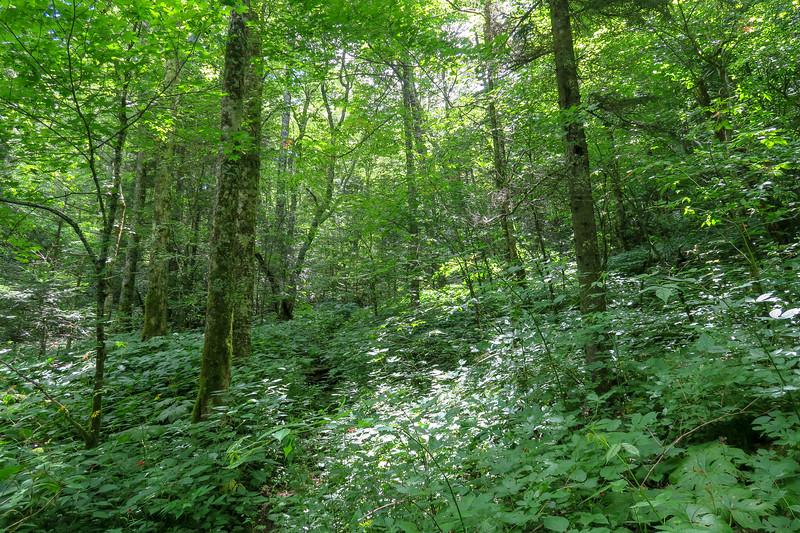Haywood Gap Trail -- 4,950'