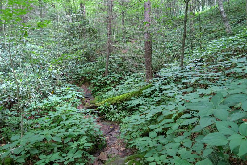 Haywood Gap Trail -- 5,000'